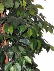 Artificial plant 180cm Ficus B313TB